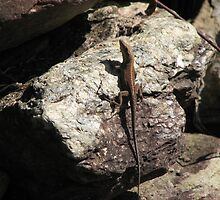 Smoky Mountain Anole Lizard by JeffeeArt4u