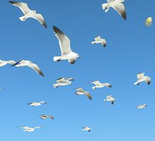 Seaguls attack! by Scott Curti