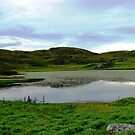 Water Lilies of the Western Isles by BlueMoonRose