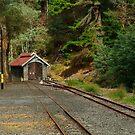 Railway Coach Shed,Walhalla  by Joe Mortelliti