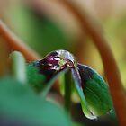 Droplet by Rowan  Lewgalon