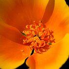 California Poppy by Michael  Moss