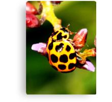 Pretty Ladybug Canvas Print