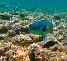 Great Barrier Reef Australia by Stephen Quennell