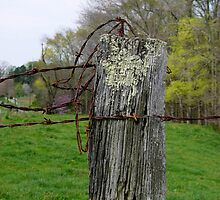 Barbed Wire by Hope Ledebur