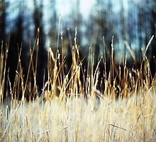 grass|glade by northwardphoto