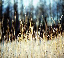 grass|glade by northwardphoto