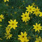 Flowers in Pennsylvania by klziegler
