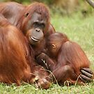 Orangutan family by Lindie