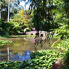 Tamborine Botanical Gardens Stone Bridge  by Virginia McGowan
