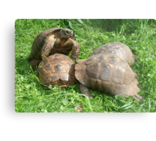 Coming Out Of Your Shell Metal Print