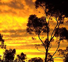 Summer Sunset - Lambina Station by Gillian Fennell