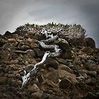 The Struggle - South East Cape, Tasmania by Liam Byrne