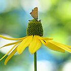 butterfly on yellow flower by Manon Boily