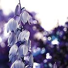 Serenity and Bokeh- Queens Park, Western Australia by Ashli Zis