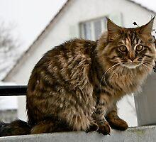 Model Feline by KylaLee