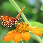 Butterfly on Mexican Sunflower by Love4KittenZ