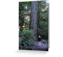 A Walk Among Giants Greeting Card