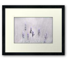 Lavender Essence Framed Print