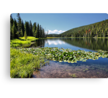 Lily Pond, Yellowstone NP Canvas Print