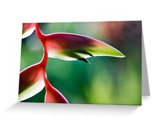 Tropicana - Sexy Pink Flower Greeting Card