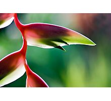 Tropicana - Sexy Pink Flower Photographic Print