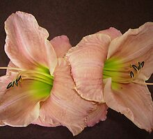 Two Peach Daylilies. by Mywildscapepics