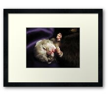 Brand New Baby Kitty Framed Print