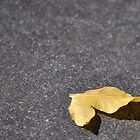 lonley little old leaf by Tamara Bush