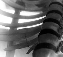 Spine by Lizzie Phillips