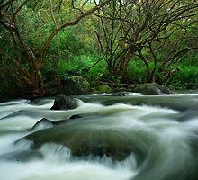 Hilo, Hawaii Stream by Russ Underwood