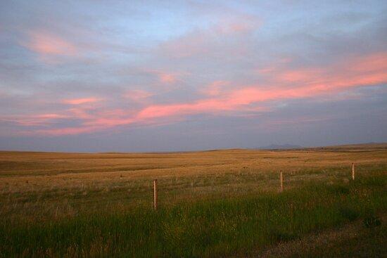 Pink Prairies by Darcy Overland