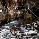 Green Heron by flyfish70