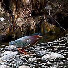 Green Heron by flyfish70