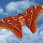 Mariposa (Atlas Moth) by UniqueDesigns