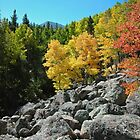 Fall Time Rocky Mountain National Park by Luann wilslef