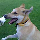 Happy Dog by RedFiddler