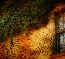 Window Grown Over by Barbara  Brown