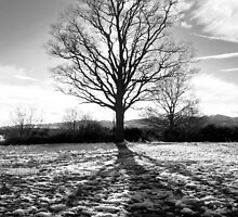 Shadows over melting snow - Malvern, Worcestershire by RBilsland