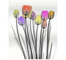 Colourful Tulips Poster