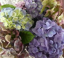 An Assortment of Mixed Colour Hydrangeas. by Mywildscapepics