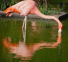 Flamingo symmetry by ablasius