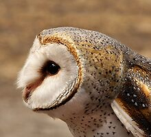 Masked Owl by Marion  Cullen
