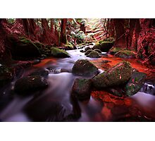 """""""Little Forester River-2"""" Photographic Print"""