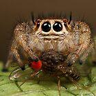 Fruit fly for dinner by Scott Thompson