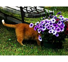 Curiosity And The Cat  Photographic Print