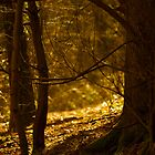 Golden woods by Angi Wallace