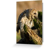 Tawny owl eating Greeting Card