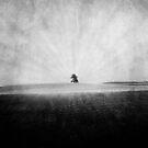 landscape. by flightlessXbird
