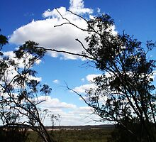 View over the Valley. Regional NSW by lu138